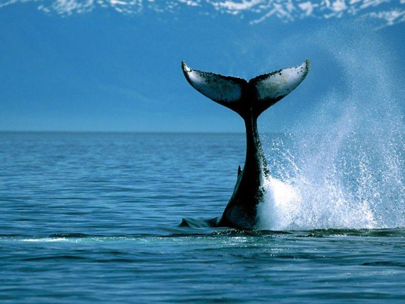 Foto di black.whale