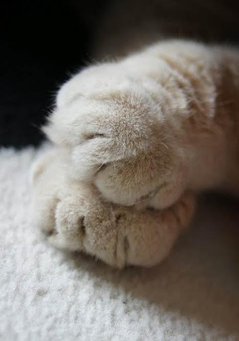 Foto di gatta.sissi