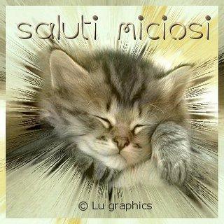 Buon pomeriggio cucciolo gatti e cani saluti divertenti for Buongiorno con gattini